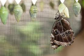 the cycle of butterflies and moths