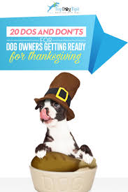 thanksgiving dog thanksgiving with dogs 20 dos and don u0027ts for pet parents