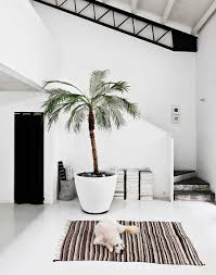 Black And White Interior Design Interior Inspiration Palmtree Dog White Space More On