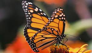biologicaldiversity org assets img species inv