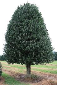 heirloom tree and garden