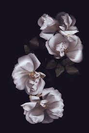 243 best floral images on pinterest flowers flower power and