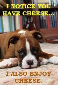 boxer dog noises 14 images only lovers of boxers will recognize re pinned by