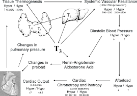 thyroid disease and the heart circulation