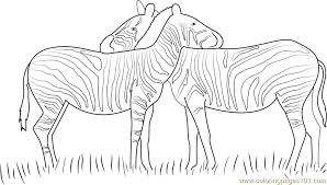 zebras love coloring free zebra coloring pages
