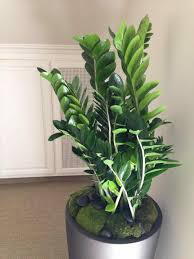 flowering pot plants indoor cute interior and beautiful modern