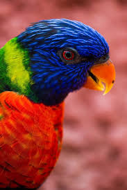 parrots in paradise kealakekua hawaii exotic bird 112 best rainforest images on pinterest exotic animals forests