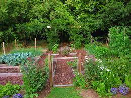 your july veggie garden updates