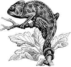 chameleon clipart etc
