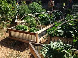 Backyard Kitchen Garden Backyard Vegetable Garden Home Grown New Mexico