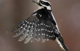 Pennsylvania birds images Birds audubon pennsylvania jpg
