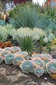 Desert Backyard Ideas 50 Ways Of Creating An Enchanted Succulent Garden In Your Backyard
