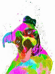 rescue a boxer dog as 20 melhores ideias de boxer dog rescue no pinterest citações