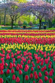 flower garden in amsterdam the 25 best tulip garden amsterdam ideas on pinterest holland