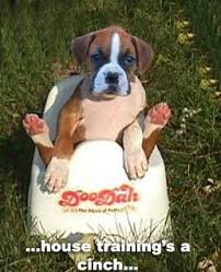 boxer dog noises cute boxer dog google search boxer dogs pinterest dog