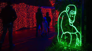 zoolights set to return nov 24 with more than 1 6 million lights
