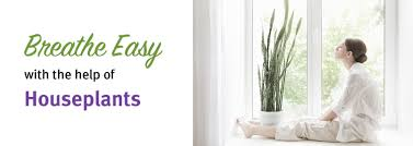 breathe easy how to purify the air with 8 indoor plants