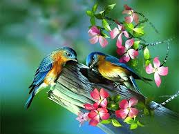 Painting of birds in spring pictures photos and images for