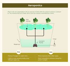 Hydroponics Vegetable Gardening by Infographic The Art Of Hydroponic Gardening Recoil Offgrid