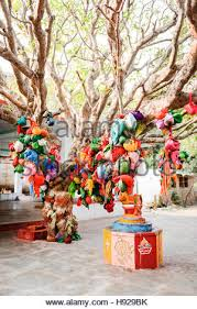 Wish Tree Wish Tree And Shrine In Durgadevi Temple Anegundi Stock Photo