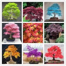 ornamental maple tree reviews shopping ornamental maple