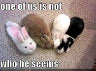 Easter Funny Memes - easter memes pictures photos images and pics for facebook