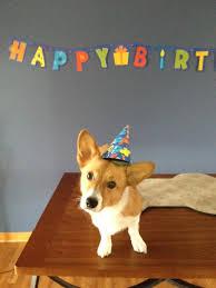 Corgi Birthday Meme - happy birthday nikopower general game discussion world of