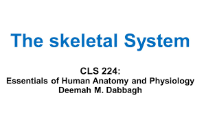 Anatomy Slides The Skeletal System Cls 224 Essentials Of Human Anatomy And