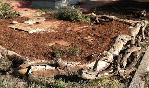 raised garden bed with logs inspirational how to build raised