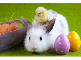 caring easter bunny coming to king of prussia mall norristown