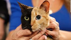 pictures of a cat pictures qygjxz