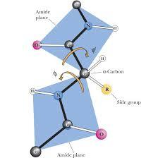 chm333 principles of biochemistry