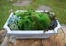 moss dish gardens moss and stone gardens