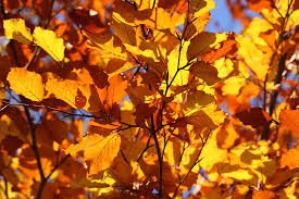 Fall Cleanup Landscaping by Schedule Your Fall Cleanup Today Uncapher Landscaping