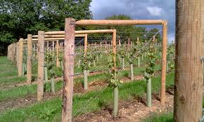 grapevine trellis designs grape trellis training systems