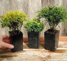 109 best miniature garden plants images on miniature