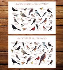 Delaware birds images Northeast state backyard birds art print features local pride jpg