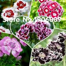 Cheap Flower Seeds - cheap bonsai buy directly from china suppliers start blue