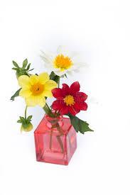 dalia in vaso dalia in vaso fotografia stock immagine di annata background