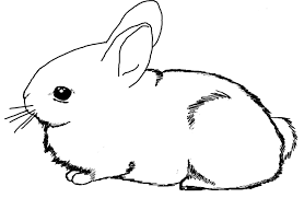 Coloring Printable Rabbit Coloring Pages Rabbit Colouring Page