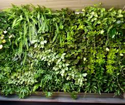 Vertical Gardening by Notes From The Garden Vertical Gardens Dan U0027s Papers
