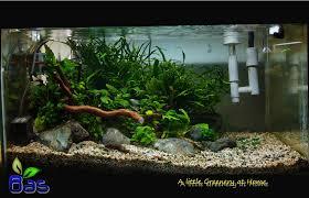 bas bas aquarium design bas aquascape design medan