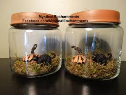 halloween black cat and pumpkin terrarium jar
