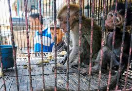 the world has a chance to make the wild animal trade more humane