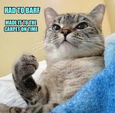 Success Cat Meme - success cat lolcats lol cat memes funny cats funny cat