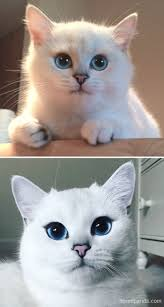 10 before and after photos of cats growing up bored panda