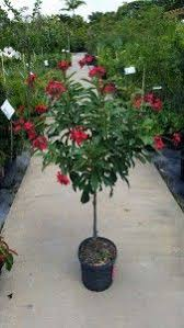 All Year Flowering Shrubs - the 25 best year round flowers ideas on pinterest outdoor
