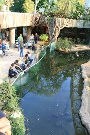 orangutan house moat with otters zoochat