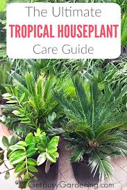 tropical houseplant care guide how to grow tropical plants indoors