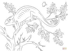 chameleon coloring page chameleon coloring pages free coloring